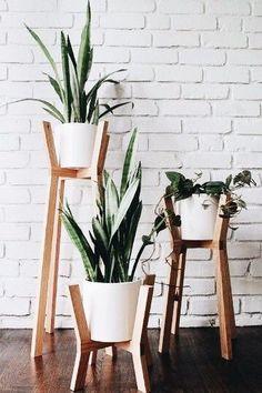 Cesta Plantas Toronto, Floristas Profesionales, Arte Floral, Floristería Online, Cestas de Plantas de Regalo, Comprar Flores Online
